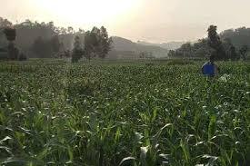 ऊंचे दाम से खेती के मुनाफे में 12 फीसदी तक की वृद्धि की उम्मीद