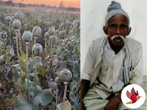 અફીણનું વાવેતર કરનાર ખેડૂત ઝડપાયોઃ ૧૯૫૧ છોડ જપ્ત