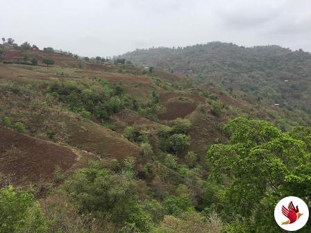 આજે વિશ્વ વન દિવસ – વડોદરા વન વર્તુળ દ્વારા ચાર જિલ્લામાં વનોની તંદુરસ્તી જાણવાનો પ્રોજેક્ટ હાથ ધરાયો