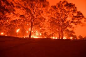 Australia begins wide-ranging enquiry into deadly bushfires