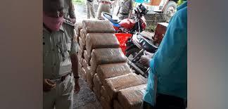 Cannabis worth Rs 50 lakh seized in Tripura