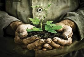 उत्तराखंड में आज रोपे जाएंगे 10 लाख पौधे