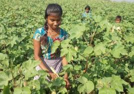 ગુજરાતમાં ૧.૩૦ લાખ બાળકો મજૂરી કામ કરે છે