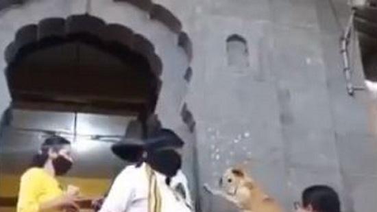 લોકો કૂતરા પાસેથી મેળવી રહ્યા છે આશીર્વાદ