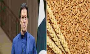 पाकिस्तान के पास सिर्फ 21 दिन का गेहूं